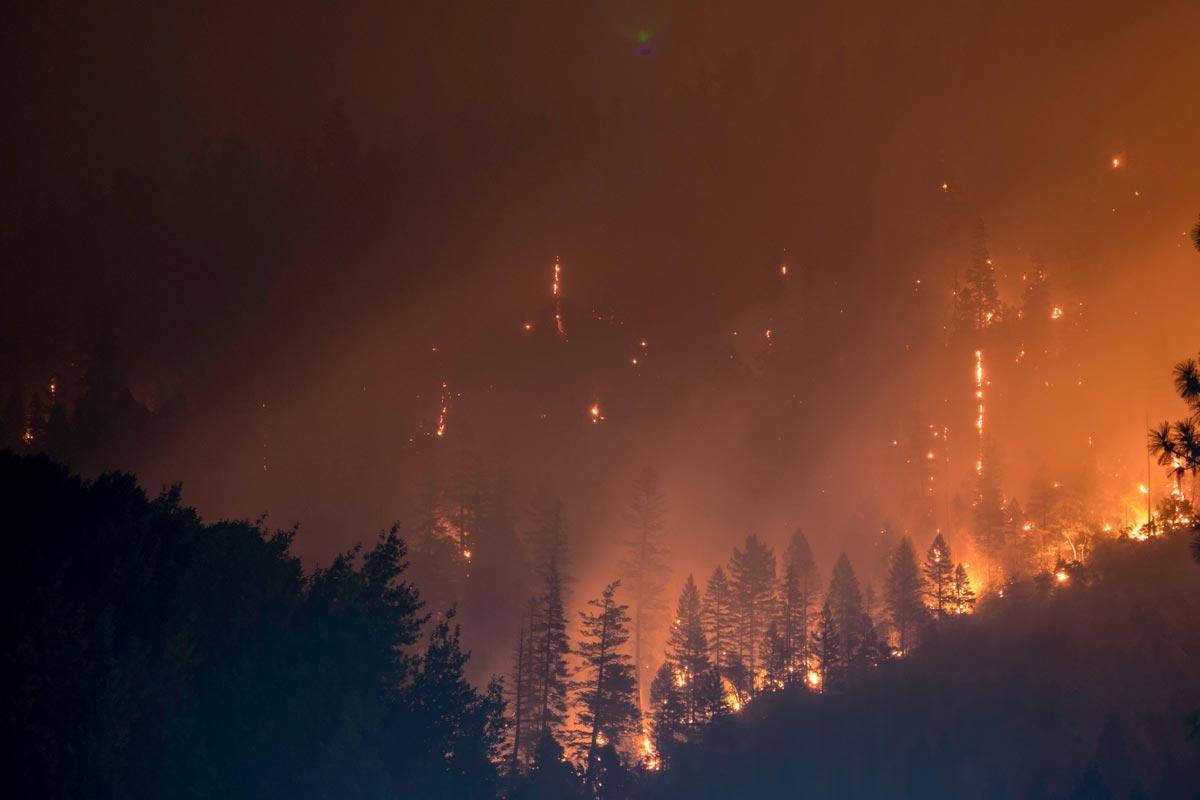 Испанский проект подарит сгоревшим лесам вторую жизнь