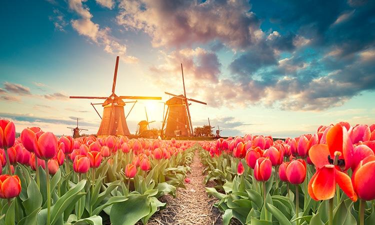 Melhores cidades para morar na Holanda tulipas
