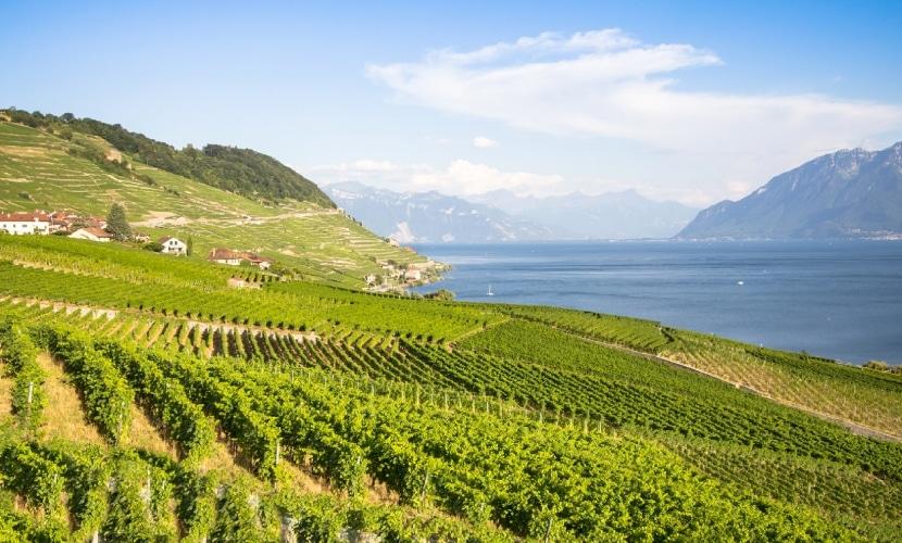 Visite vinhedo em Lavaux quando morar na Suíça