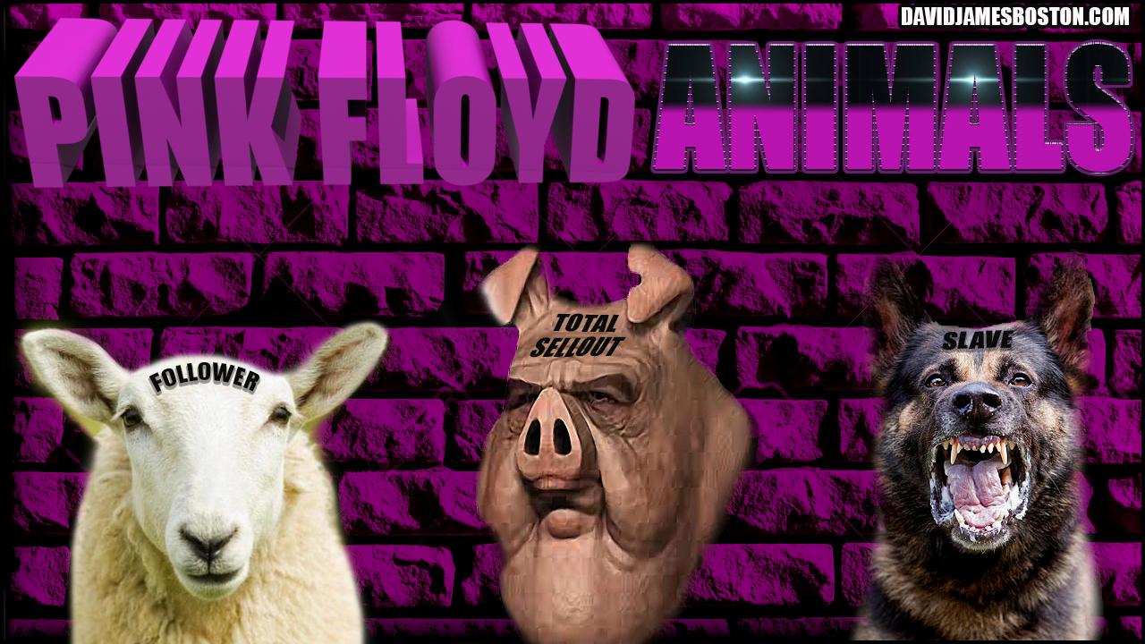PINK FLOYD ANIMALS PHOTO WORK