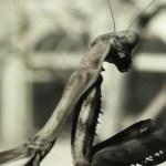 invertebrate3