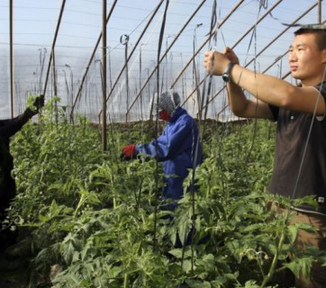 Chinese businesses in Russia are known for employing only ethnic Chinese almost exclusively and for using intensive types of agriculture and lumber harvesting (Image: flashsiberia.com)