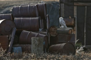 Fuel and chemical barrels abandoned in the Russian Arctic (Image: social media)