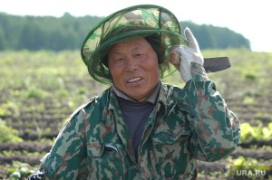 Chinese migrant at a farm near Chelyabinsk, Russia (Image: ura.ru)