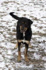 Korsa, rescued by volunteers in Volgograd
