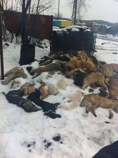 Discarded animal corpses in Volgograd
