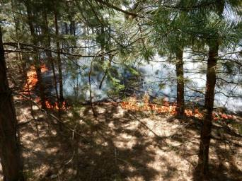 Forest fire near rear Borivske, Luhansk Oblast on 11 May, caused by 152mm artillery attack a day before. The fire spread around 15 ha. Photograph: Facebook/pressjfo.news