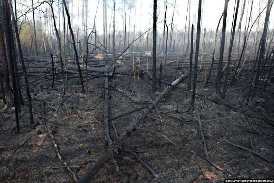 Forest area near Berezhost village burned down