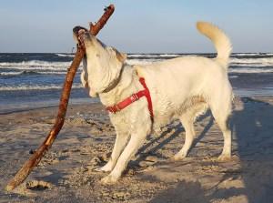 Urlaub mit Hund, Hundestrand-Peenemünde