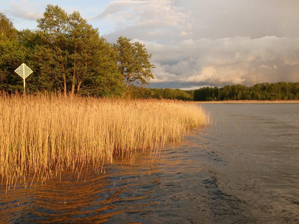 mecklenburgische seenplatte, See mit Schilfgürtel im Abendlicht