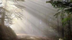 Nebel_Wald