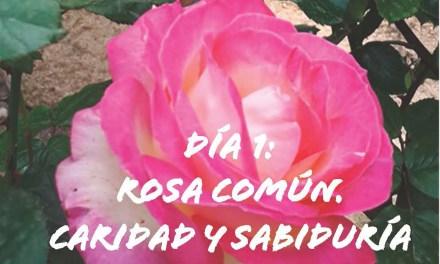 DÍA 1, ROSA COMÚN. CARIDAD Y SABIDURÍA
