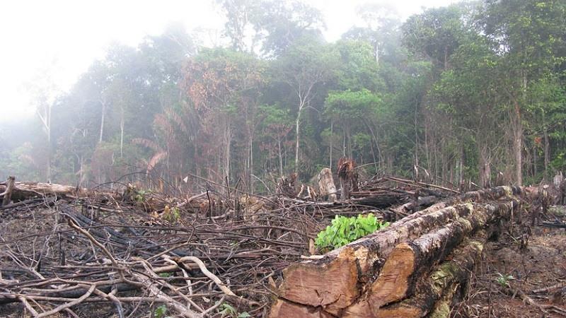 La deforestacion en el Amazonas se acerca a su punto de no retorno