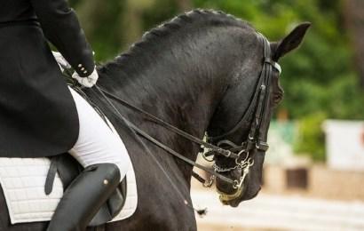 ¿Cuál es el equipamiento básico para montar a caballo?