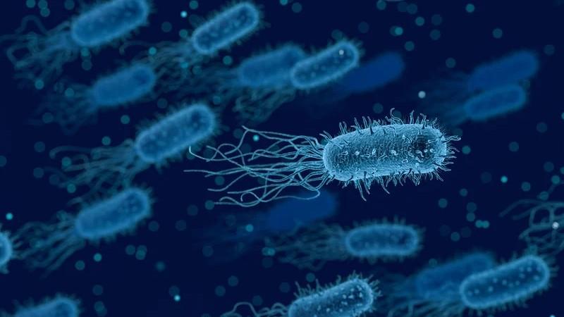 La incapacidad para fabricar antibióticos nuevos favorece la resistencia de las bacterias a los medicamentos