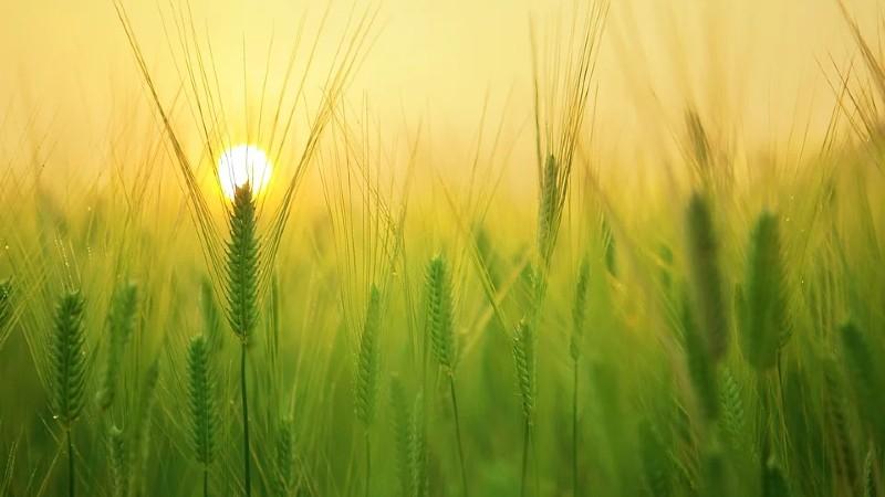 Reforma de la Política Agraria Común