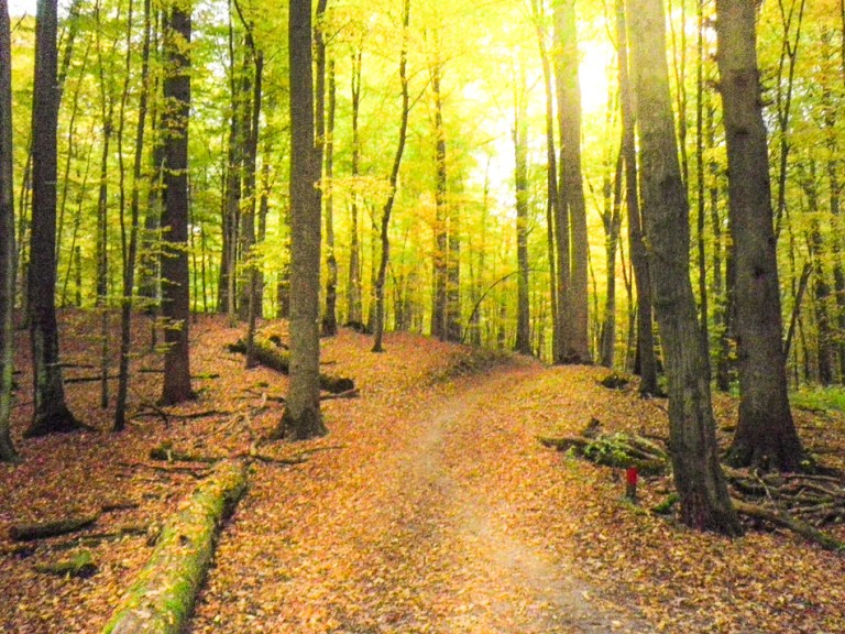 Sonian forest in the outskirts of Brussels