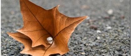 Hoja de árbol caido, previsión clima septiembre 2014