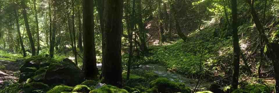 Borjomi-Kharagauli Wilderness