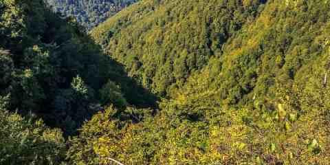 Kuziy-Trybushany WILDForest