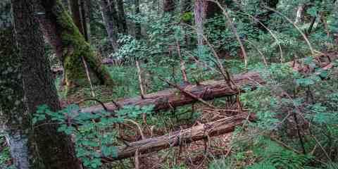Chornohora Wilderness Candidate