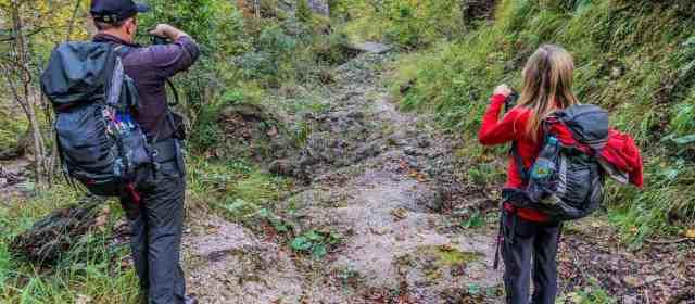 Re-wilded roads in Kalkalpen Wilderness