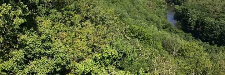 Thayatal WILDForest