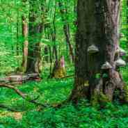 Discover the UNESCO Beech Forest books