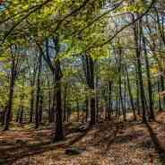 Challenge to protect European forests