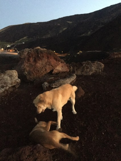 #sicily #roadtrip #camperlife #Italy #EtnaVolcano #wilddogs #wanderlust
