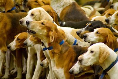 Le Parlement européen souhaite mettre un terme   au commerce illégal de chats et de chiens