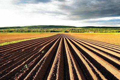 Accord au sein du Conseil sur la nouvelle Politique Agricole Commune