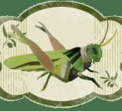 Spain - superstition - cricket