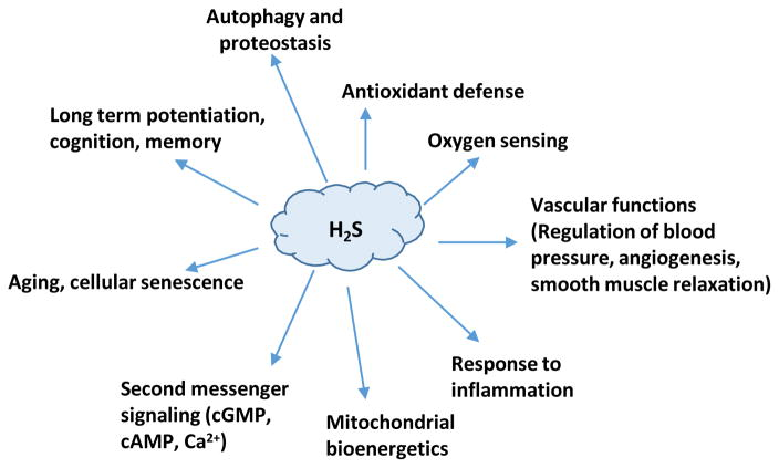 Gasotransmitter hydrogen sulfide signaling in neuronal health and disease.  - Abstract - Europe PMC