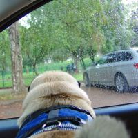 Pug meeting at 24.08.2014 in Tallinn