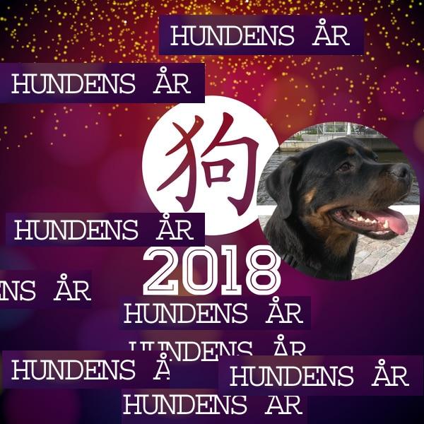 Hundens år 2018_Läs mer på www.euroresor.se