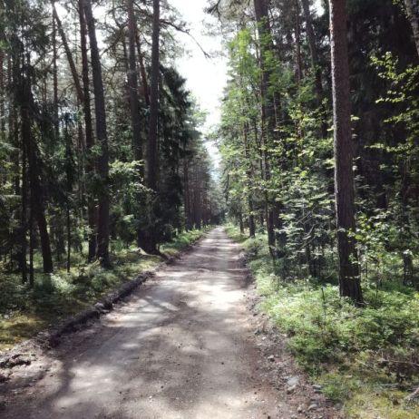 Lettischer Radweg im Wald (hier noch fahrbar und wenig sandig)
