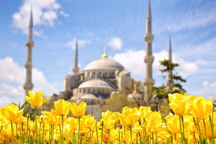 Festival de los Tulipanes en Estambul - En frente de la Mezquita Azul