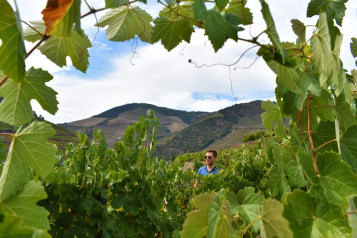 A stroll through the Douro Valley vineyards is a real pleasure