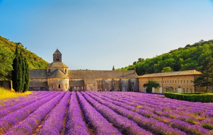 Romanesque (and romantic) Senanque abbey among lavender fields in Provence, France