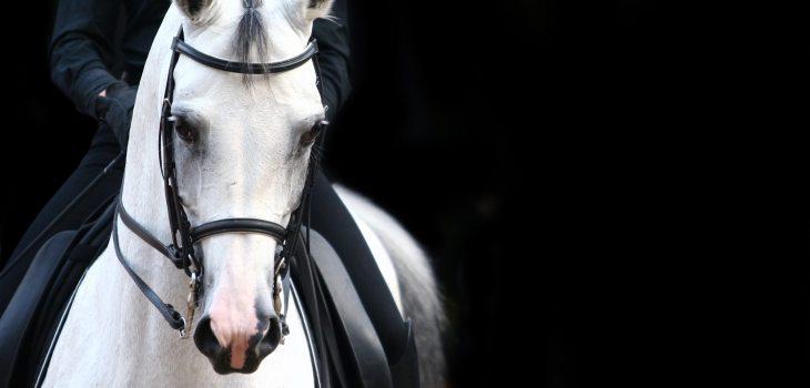 Exercise Dressage Horse