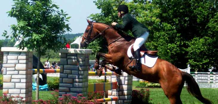 show jumping horse fitness
