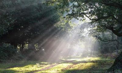 sun through trees - words-of-encouragement-2 (google free to use)