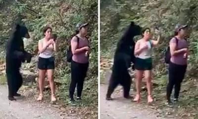 black-bear-encounter-selfie-mexico-coverimage