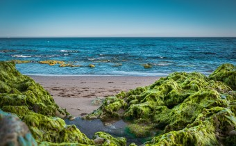 Can our oceans save us? The role of seaweed in large scale carbon capture