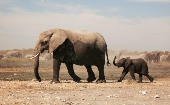 Elephants from Space: How Artificial Intelligence can Protect Nature