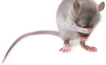 Drug found to have opposing effects on the minds of male & female mice