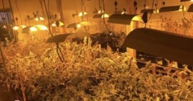 Localizan una plantación de marihuana en un pabellón industrial de Astigarraga,