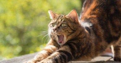 La concejala de Desarrollo Sostenible de Barakaldo dice no se abandonen de animales domésticos durante las vacaciones de verano,