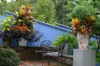 containers-of-tropical-potted-plants